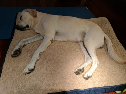 His new orthopedic bed. #Spoiled